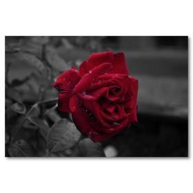 Αφίσα (κόκκινο, τριαντάφυλλο,λουλούδι)